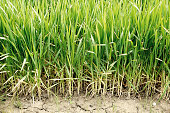 Green grass grows out of soil - textured background