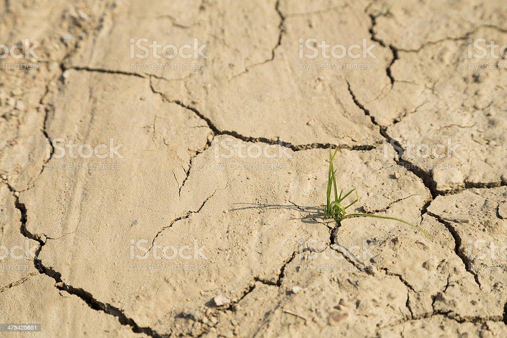 Grüne Gras-Wachstum auf trockenen Umgebung Lizenzfreies stock-foto