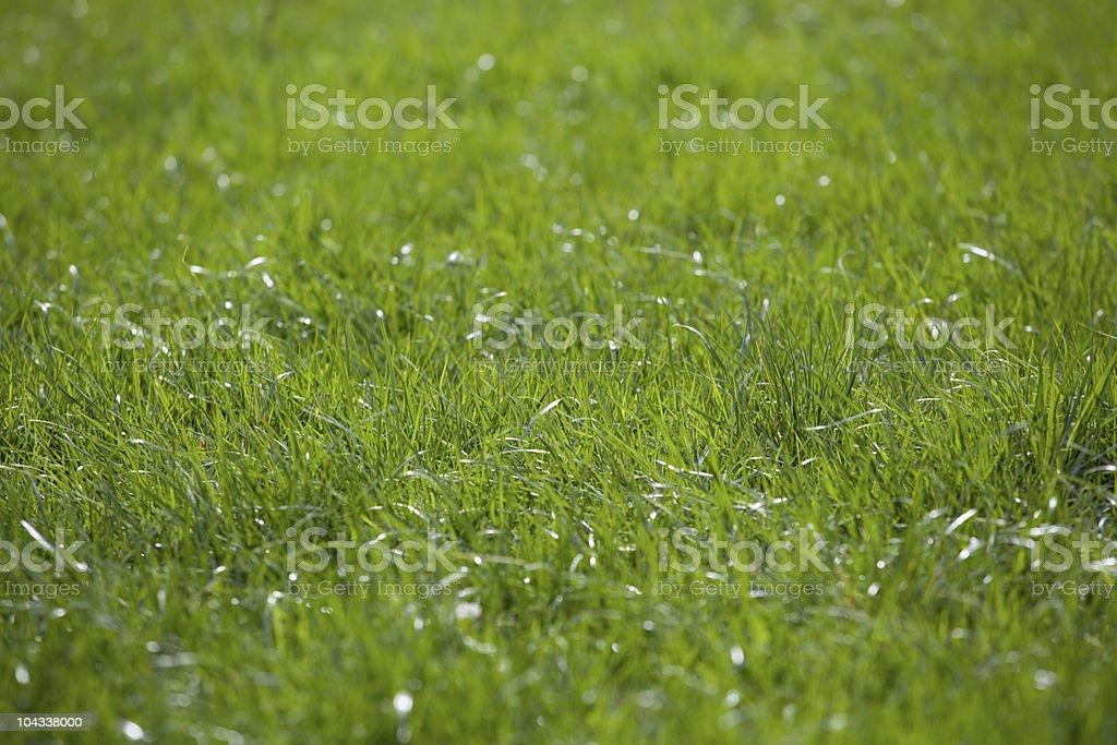 緑の芝生のフィールド ロイヤリティフリーストックフォト