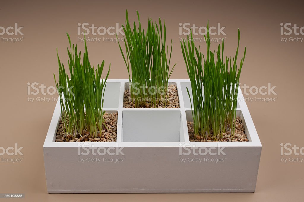 Green grass in decorative white box stock photo