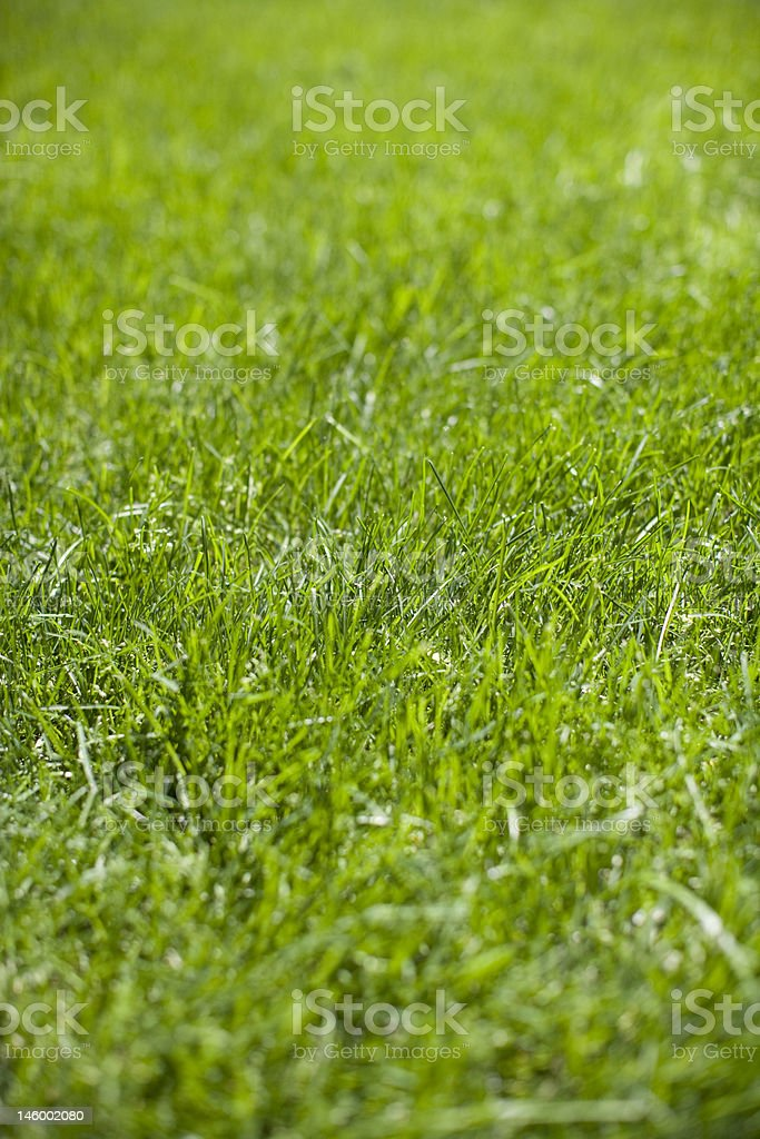 Green Grass in detail royalty-free stock photo