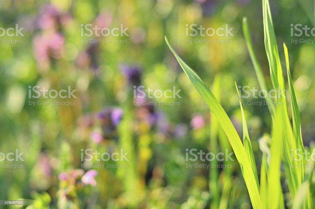 Zielona Trawa na wiosnę zbiór zdjęć royalty-free