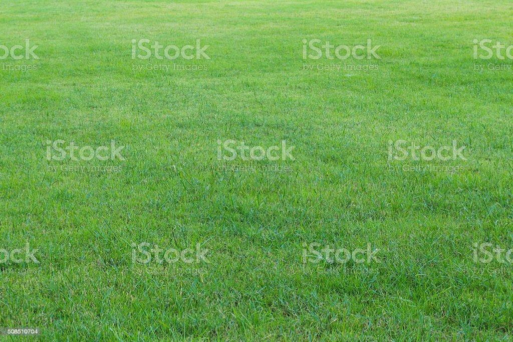 green grass in the garden(soft focus) stock photo