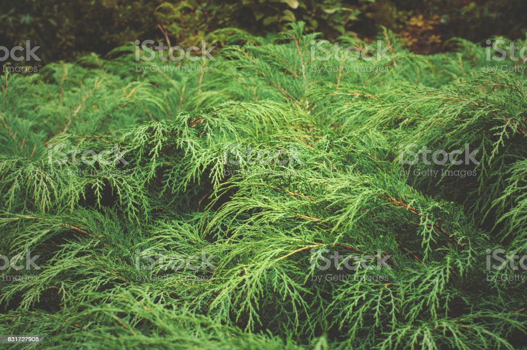 Green grass in the garden stock photo