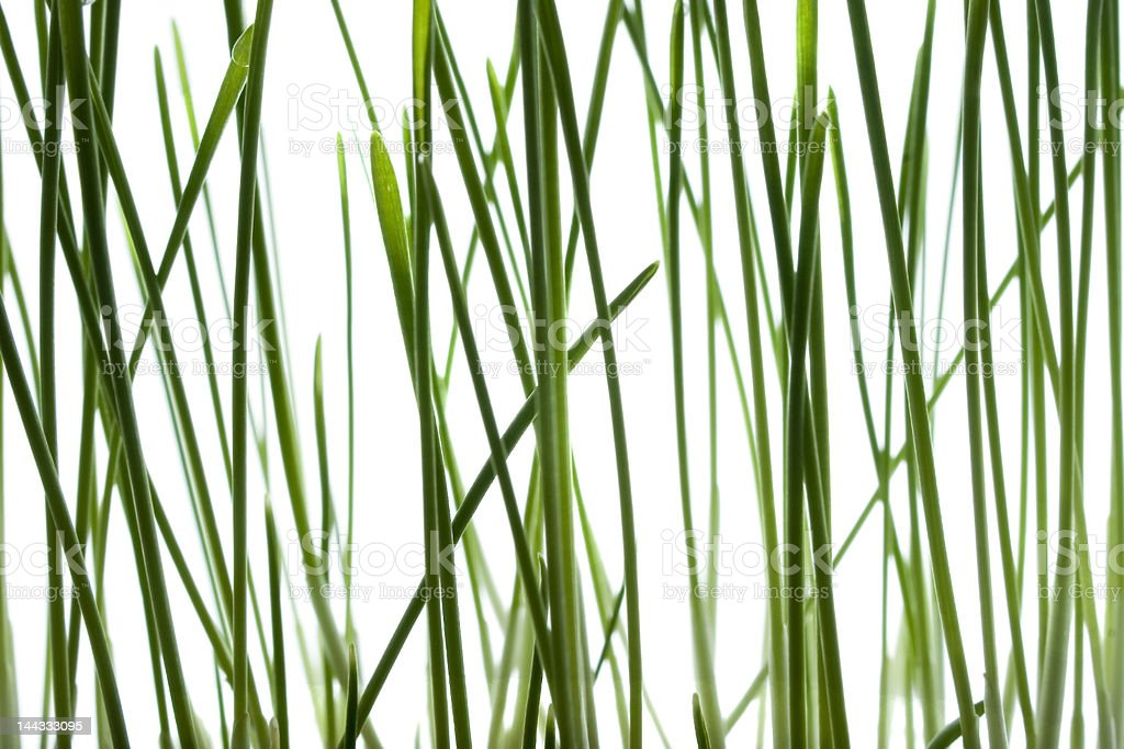 Green grass isolated royalty-free stock photo