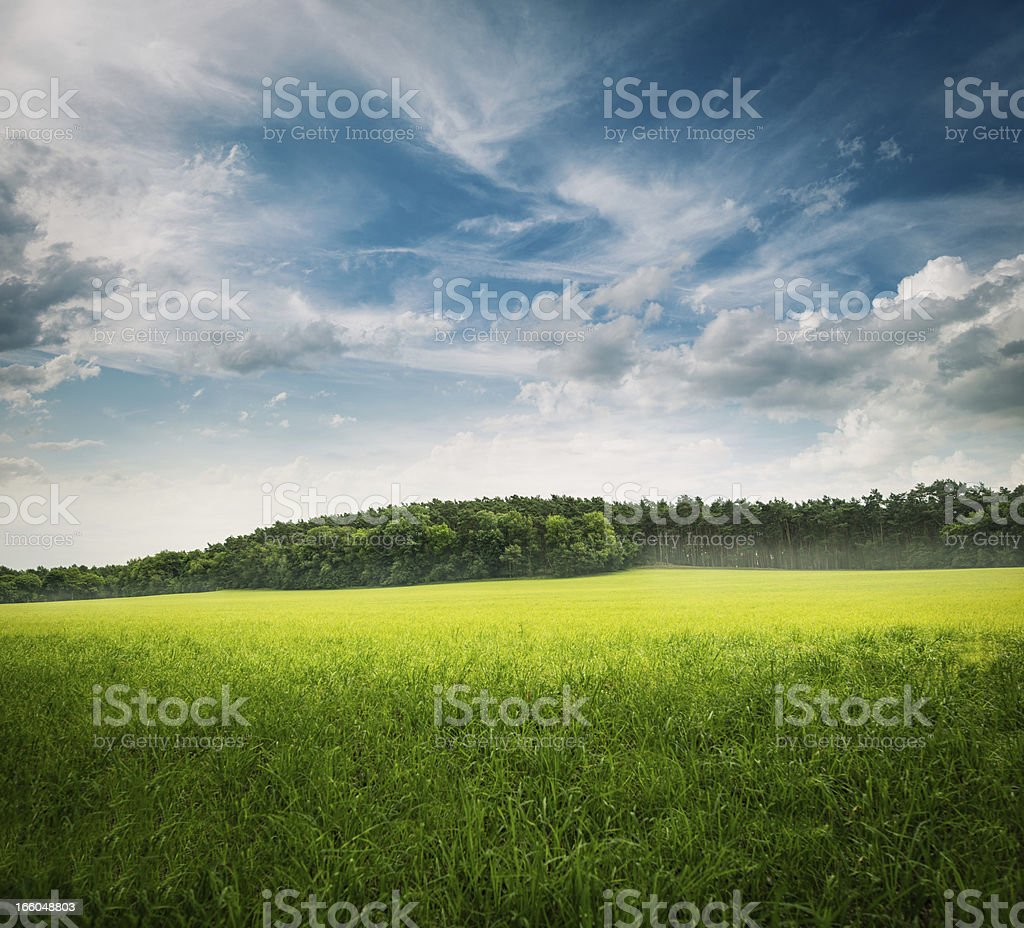 green grass landscape royalty-free stock photo