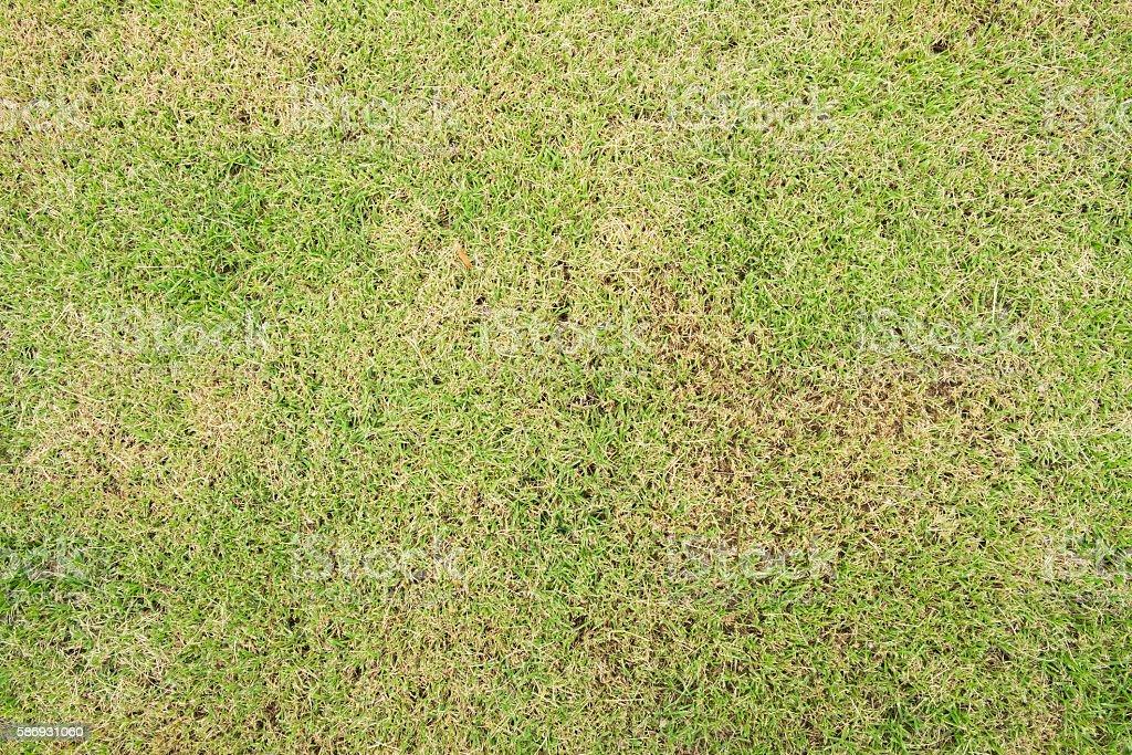Green grass lawn field stock photo