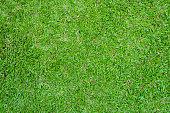 Green grass lawn field