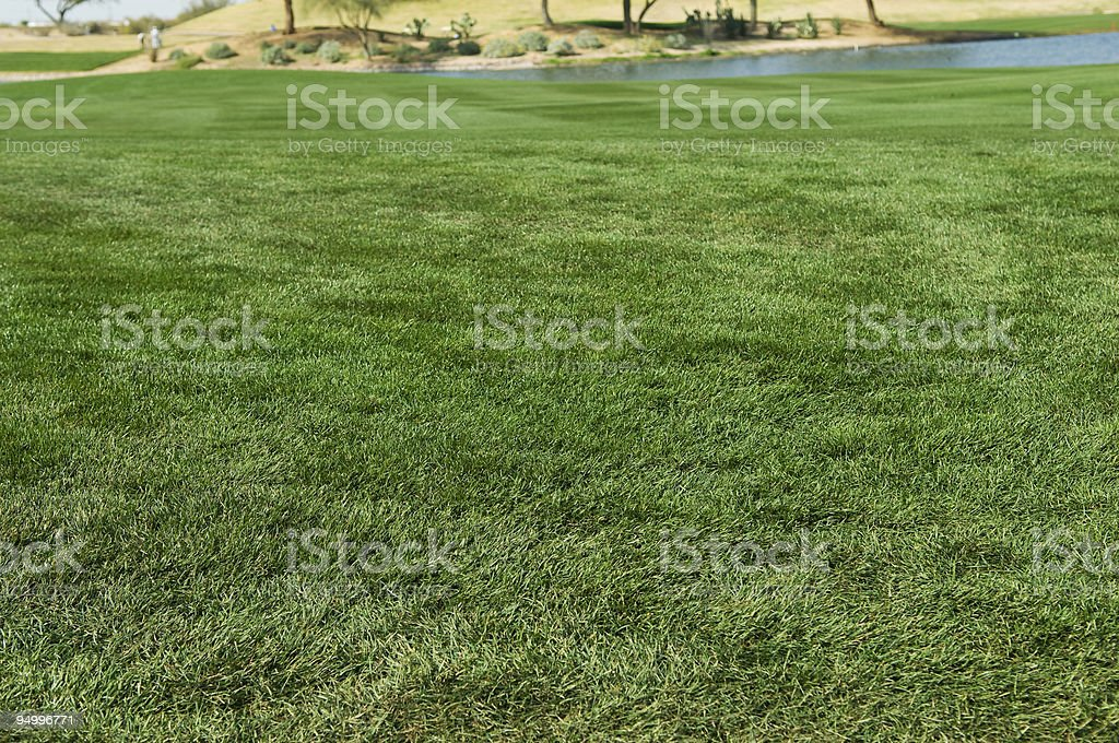 Green Grass Lawn next to a Pond royalty-free stock photo