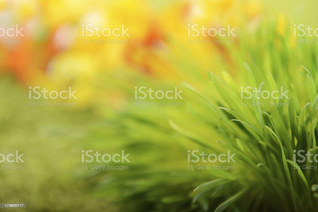 green grass macro royalty-free stock photo
