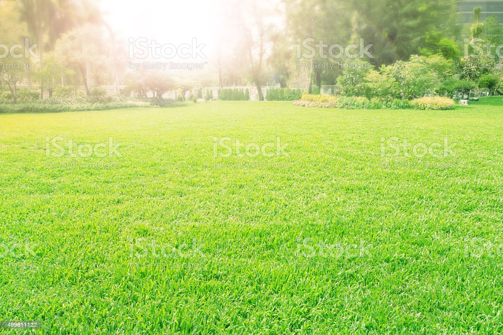 green grass meadow in park stock photo