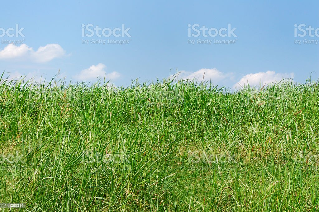 Green grass meadow royalty-free stock photo
