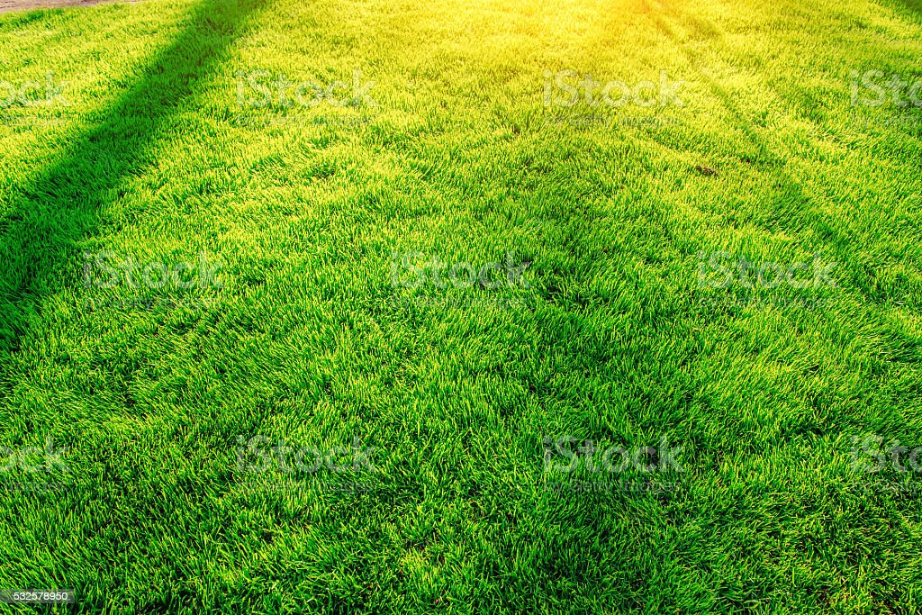 green grass. natural background texture stock photo