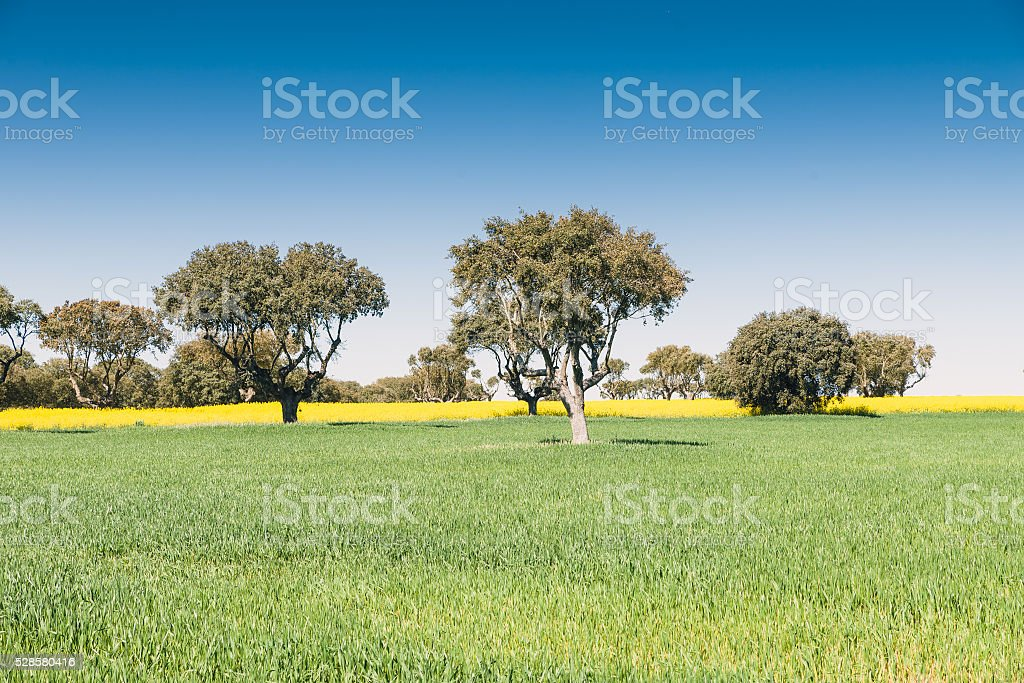 Green grass on a golf field stock photo