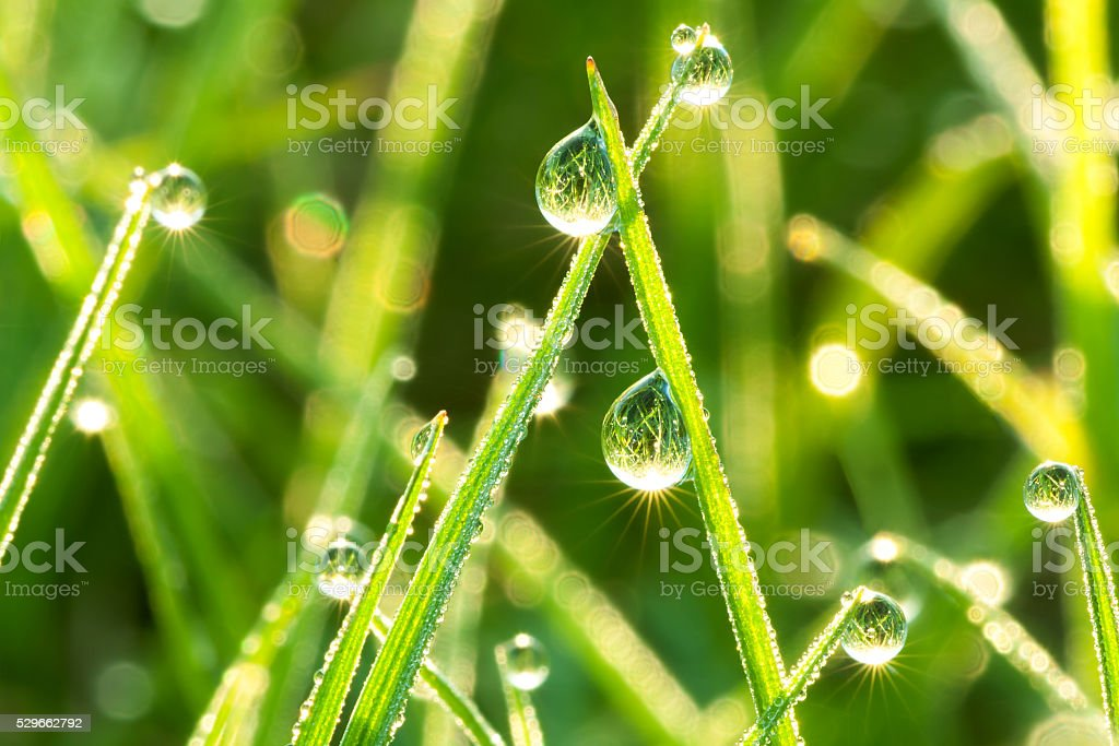 green  grass on a lawn stock photo