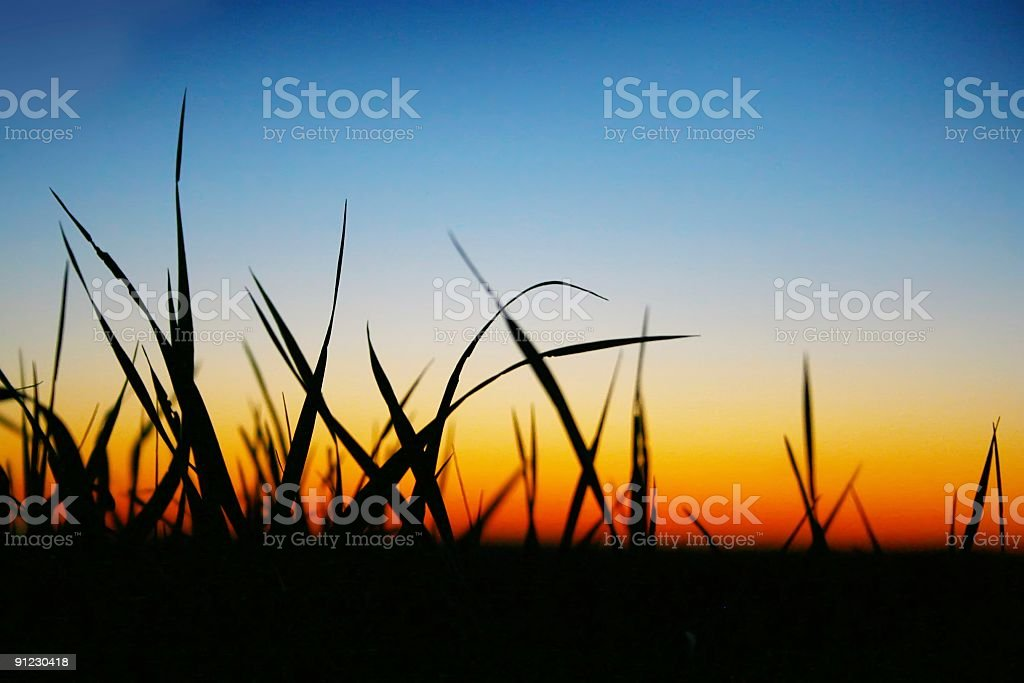 green grass on a sky background stock photo