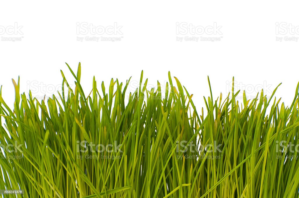 Green grass on a white background below. stock photo