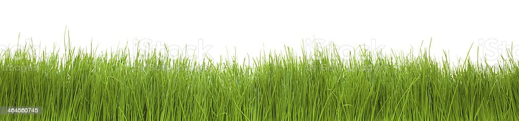 Green grass on isolated white. stock photo