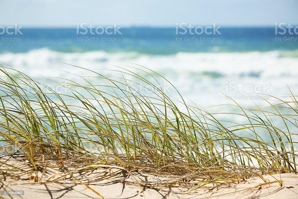 Green grass on sandy dune overlooking beach stock photo