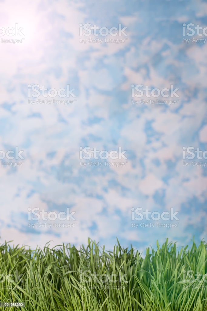 Green grass over sky background. stock photo