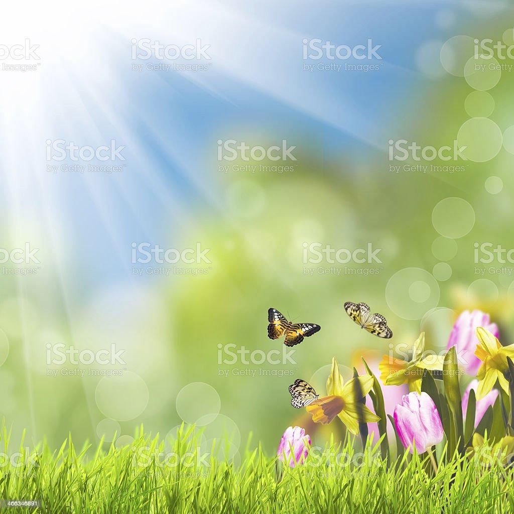 Green grass over sunlight stock photo