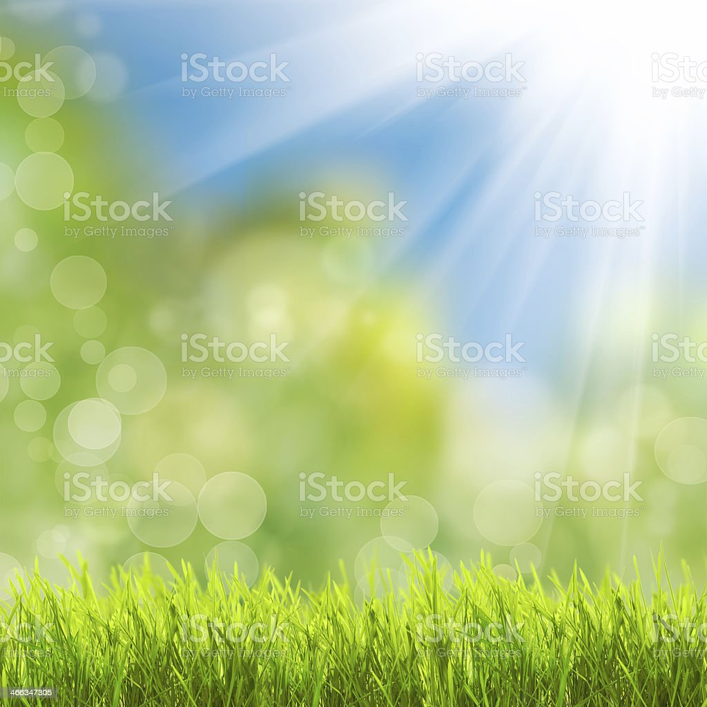 Green grass over sunlight stock photo