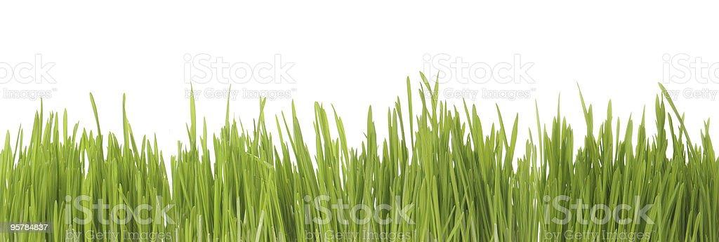 Green Grass Panorama royalty-free stock photo
