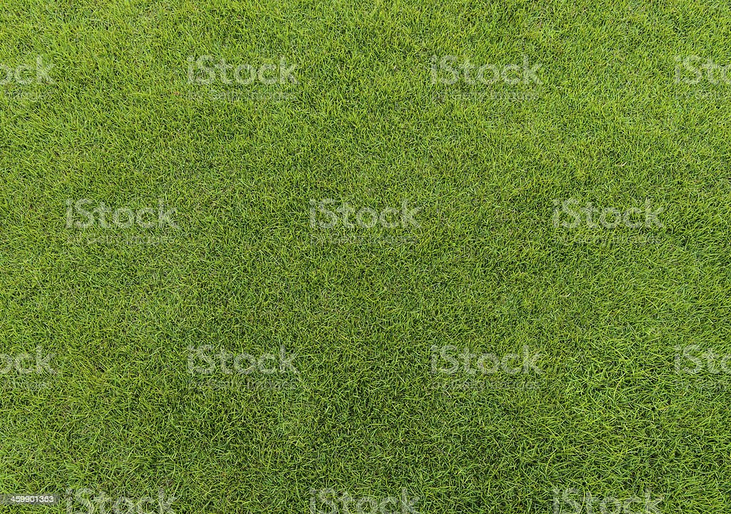 green grass pattern from golf course at sunset tim stock photo