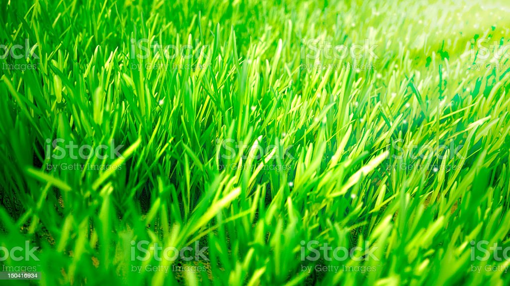 Green Grass stock photo