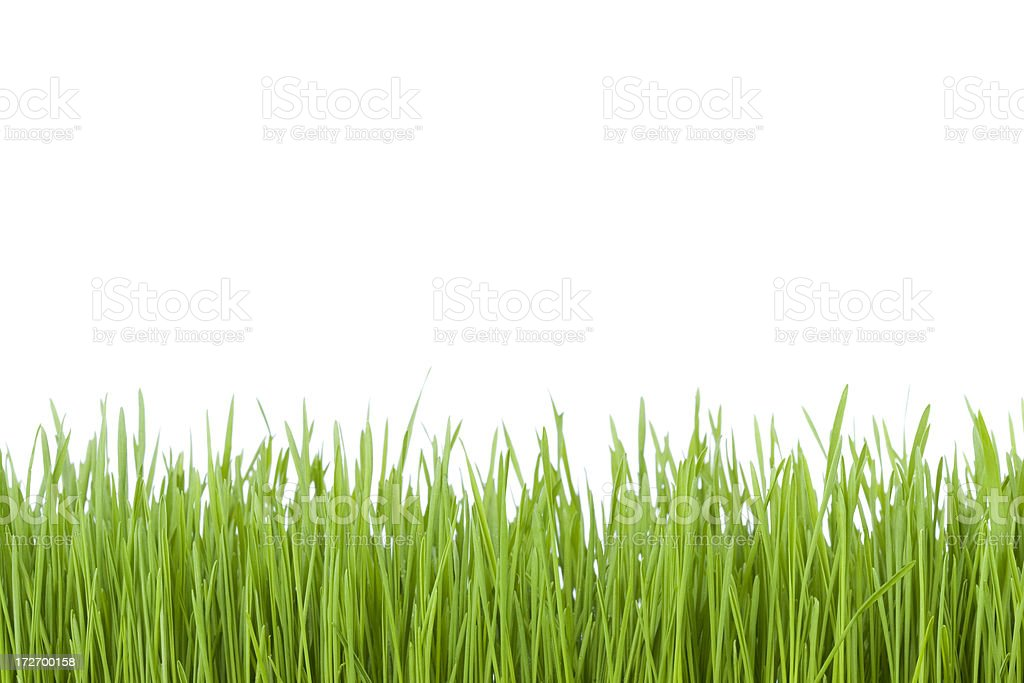 Green Grass (XL) royalty-free stock photo