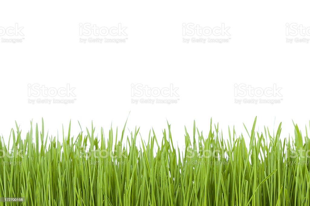 Green Grass (XL) stock photo