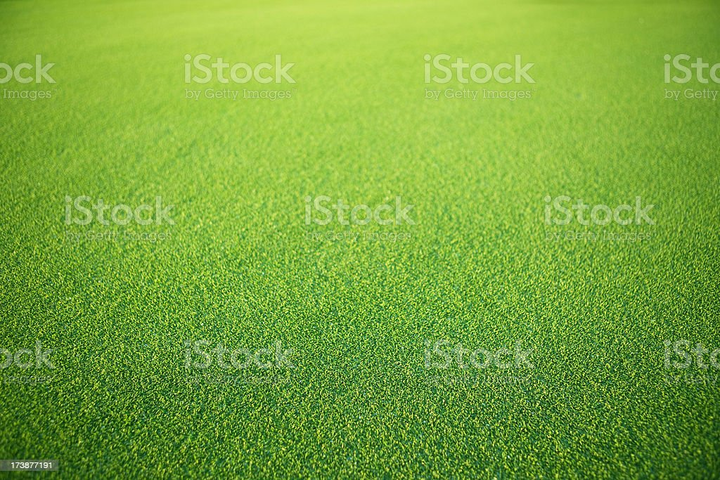 Green grass royalty-free stock photo