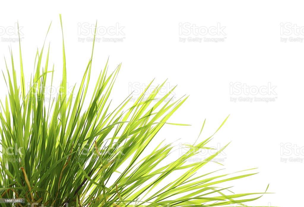 Green Grass royalty-free stock photo