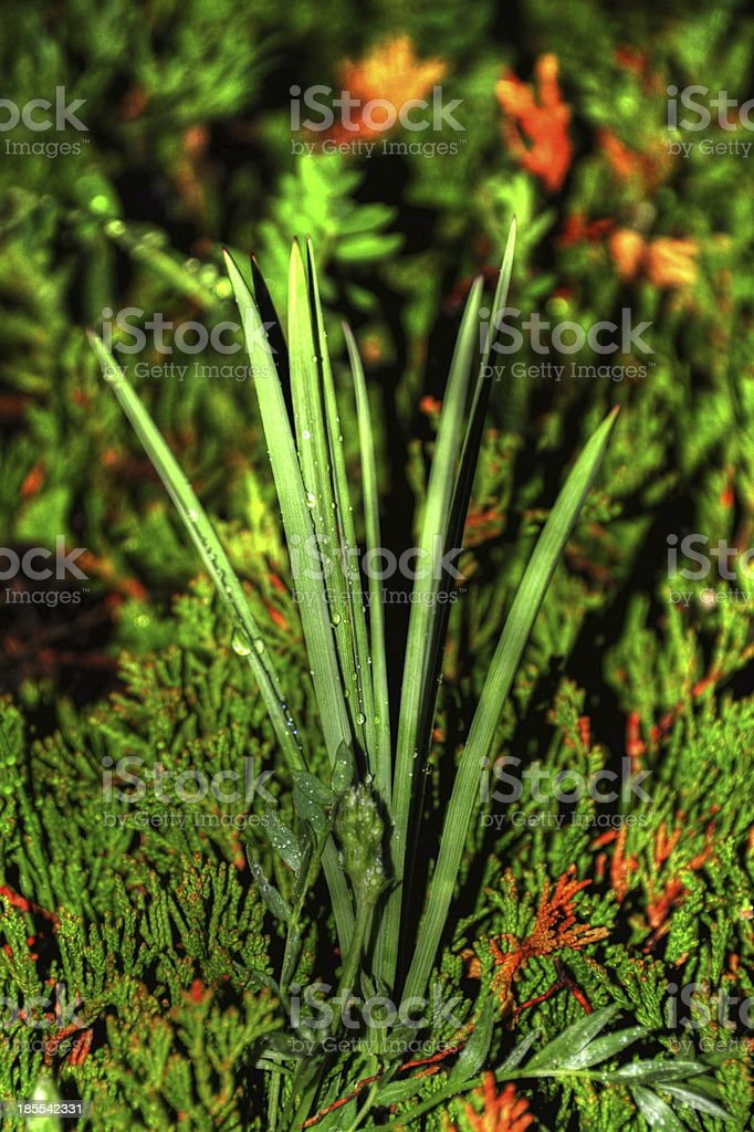 green grass plant royalty-free stock photo