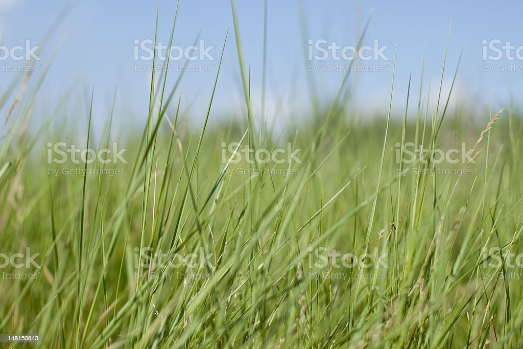 Green grass. Shallow DOF royalty-free stock photo