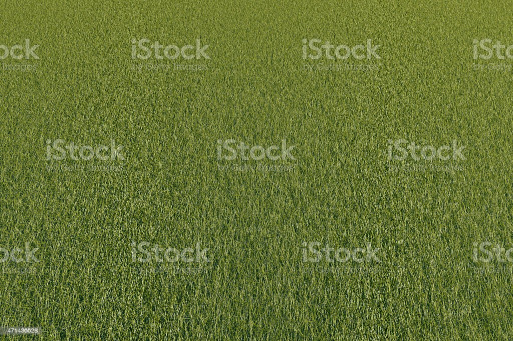 Green grass space stock photo