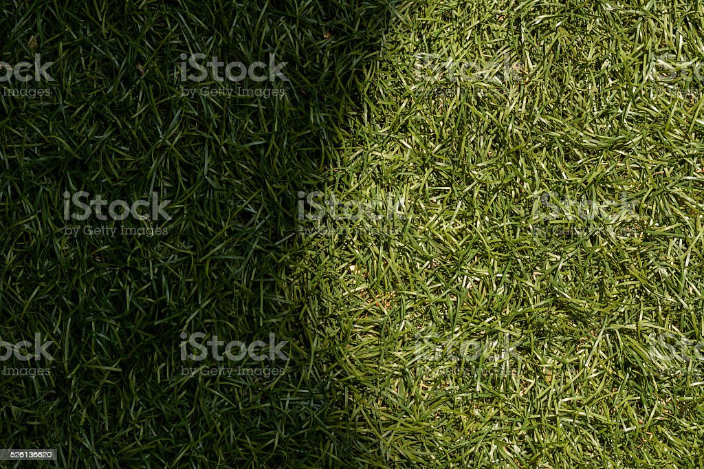 Green grass texture background, sunlight causes shadows. stock photo