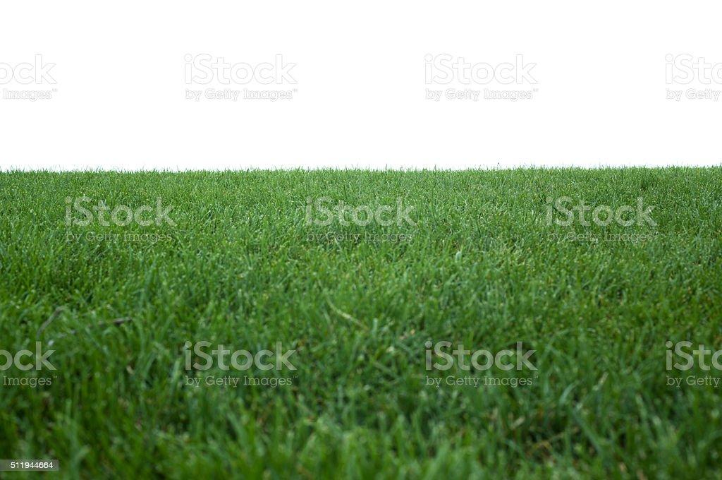 Green Grass Texture On White stock photo