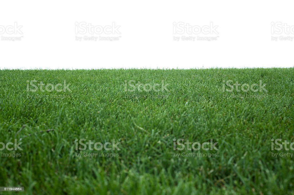 Green Grass Texture On White stock photo