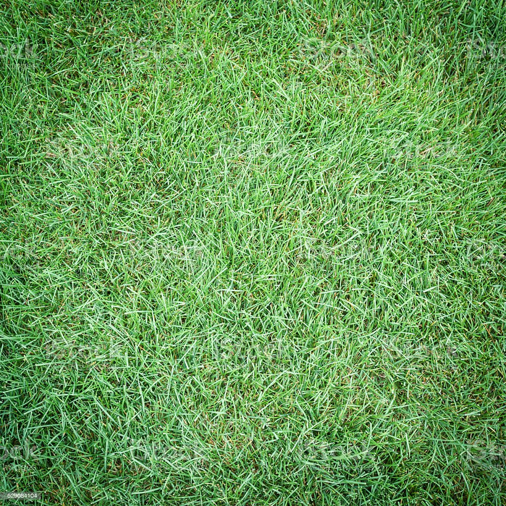 Green Grass Texture, Square stock photo