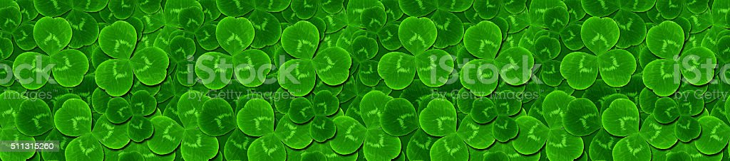 green grass three leaves clover quatrefoil stock photo
