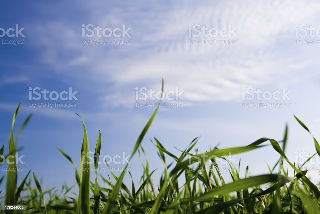 Green Grass Under the Summer Sky royalty-free stock photo