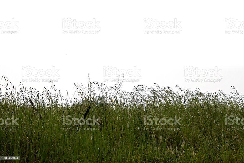 green grass vegetation stock photo
