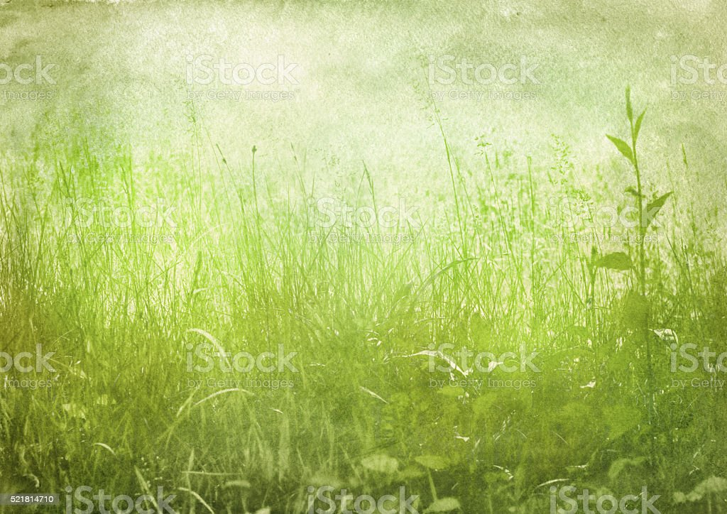 green grass, vintage background stock photo