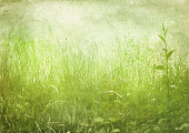 green grass, vintage background