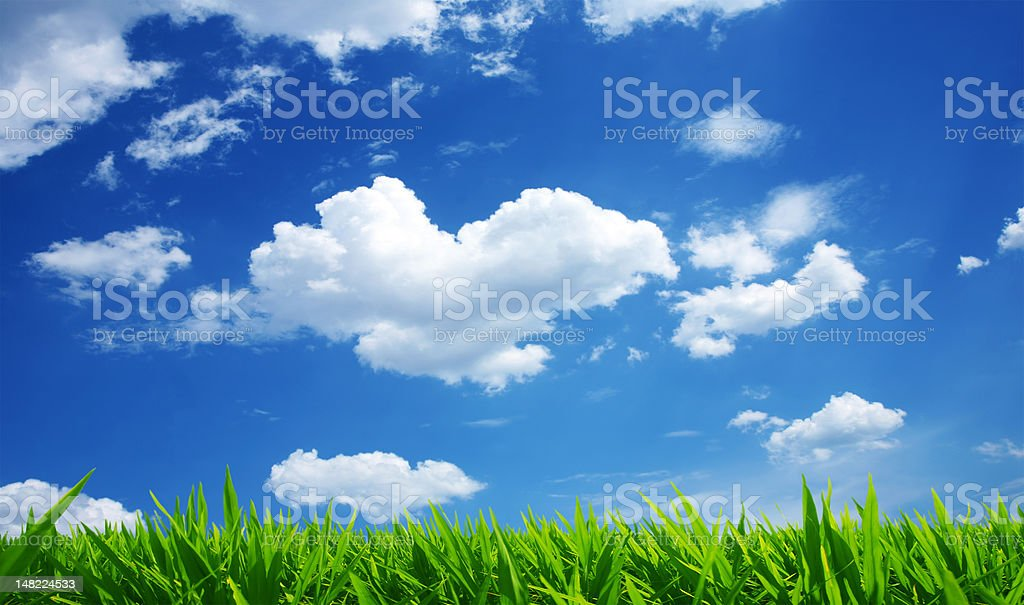 Green Grass White Clouds stock photo