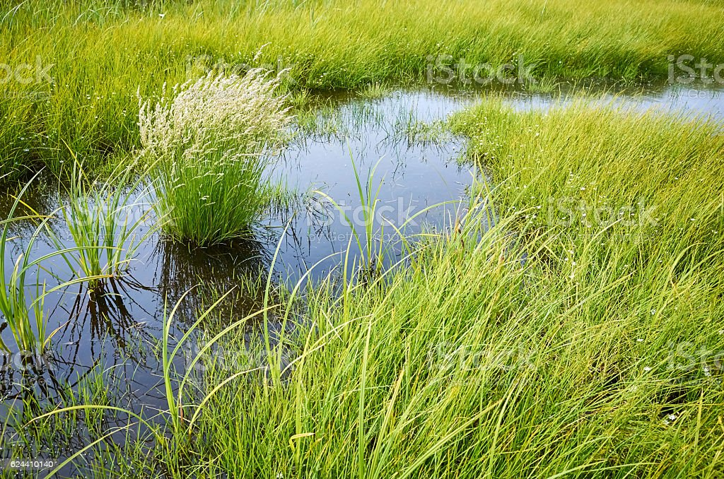 Green grass white wild flowers, dark blue sky reflected water stock photo