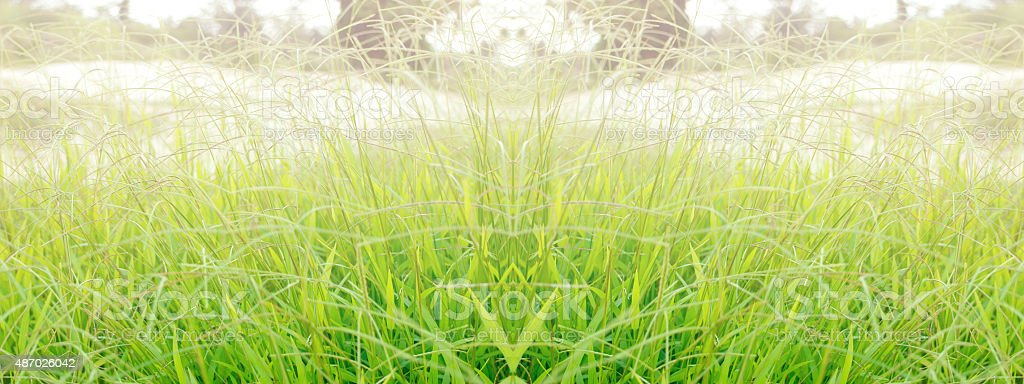 green grass wide background royalty-free stock photo