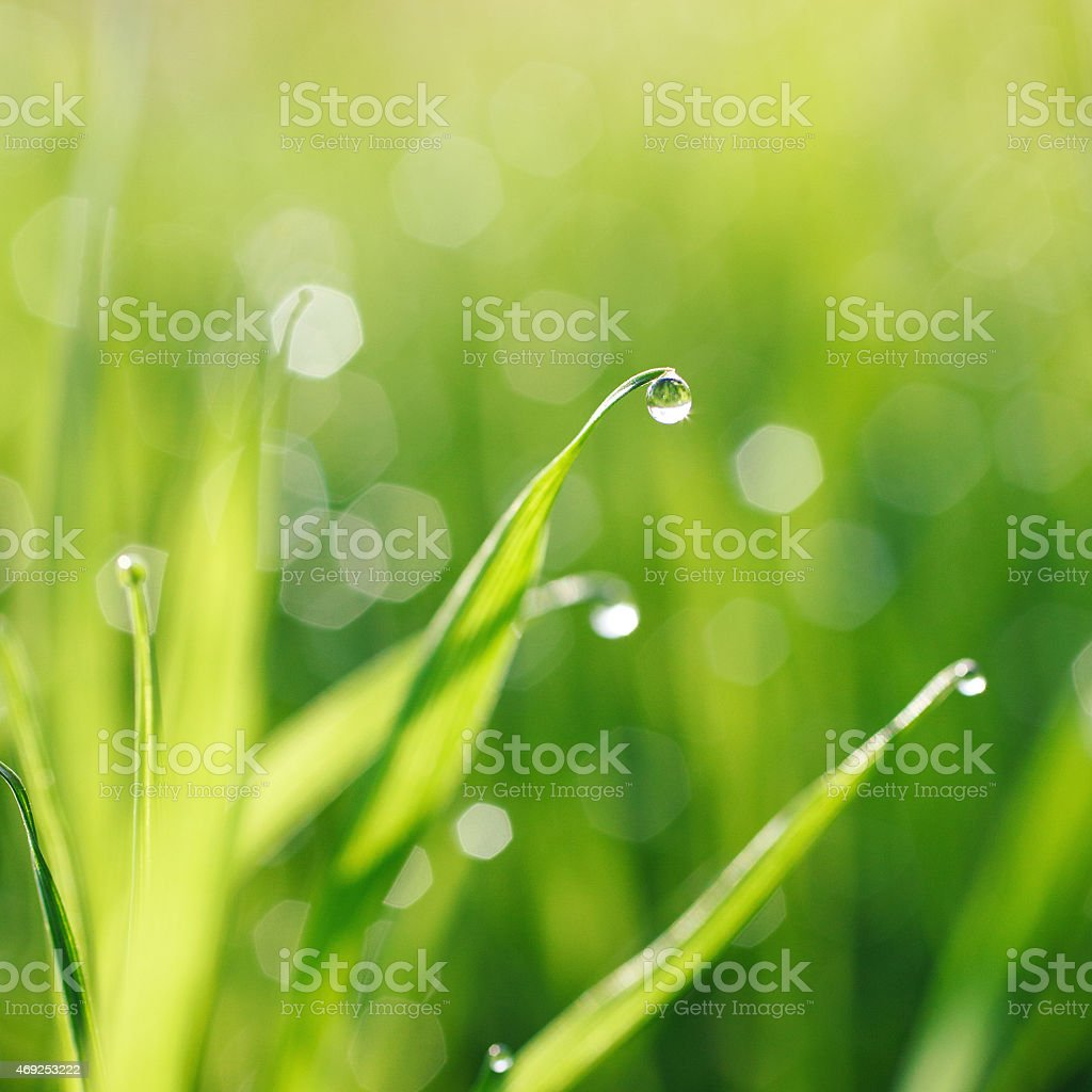 Green grass with dew drops stock photo
