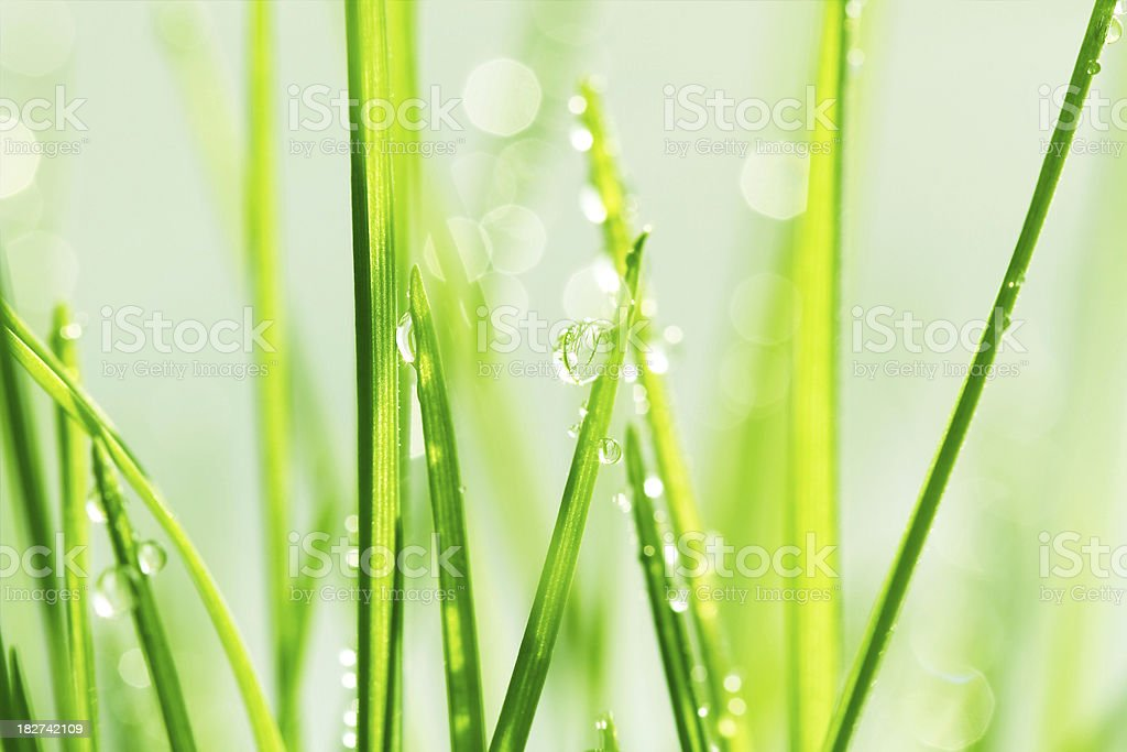 Green grass with dews royalty-free stock photo